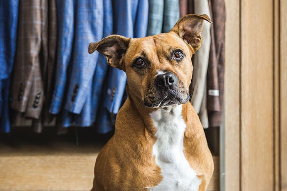 Dog in front of hanging suit coats from Yacoubian Tailors