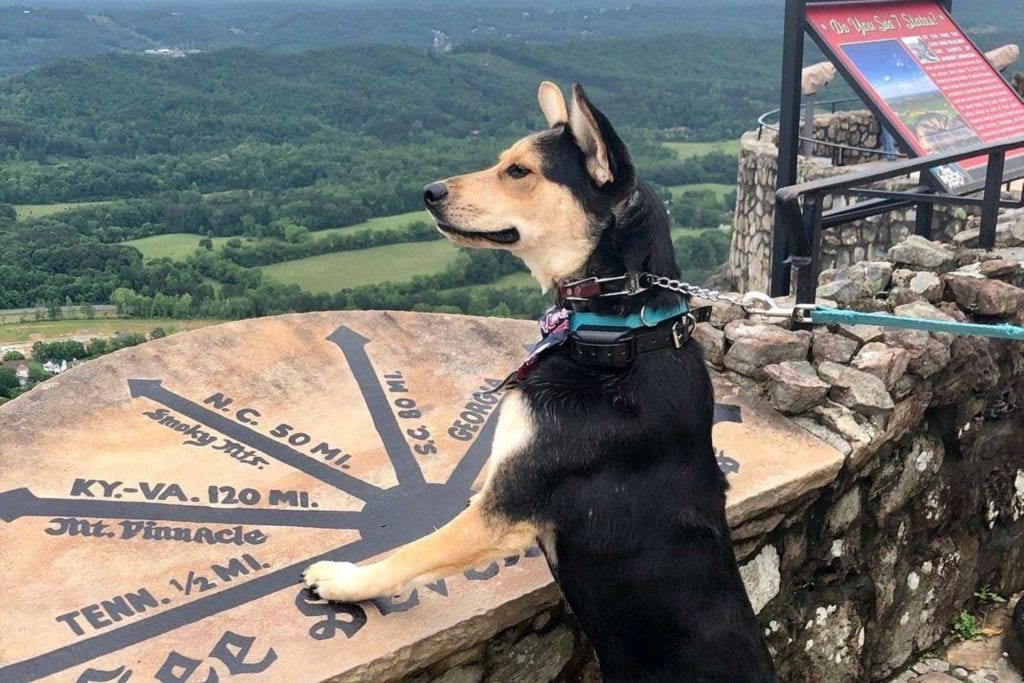 Dog at the see seven states lookout at Rock City Gardens