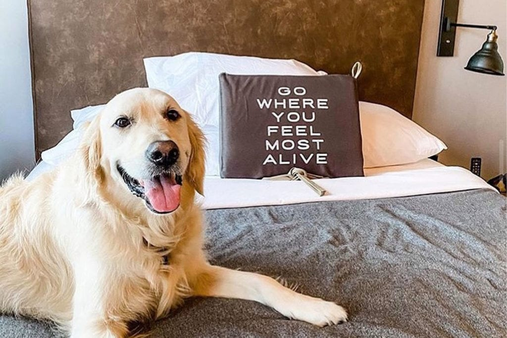 golden retriever laying on a bed at the Moxy