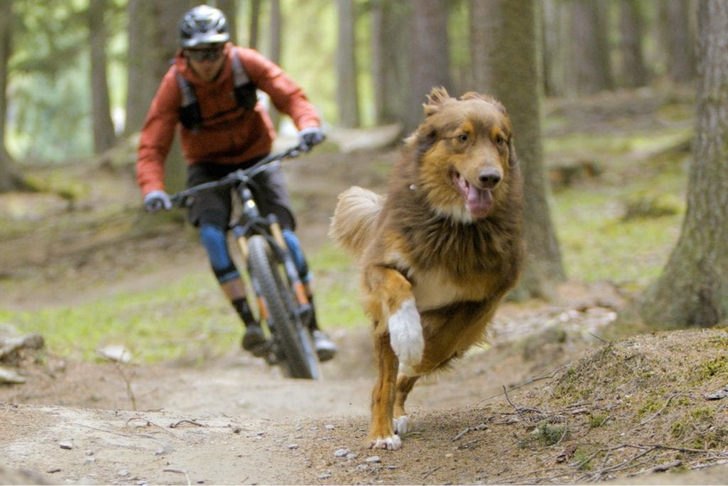 Man biking behind his running dog in a film for the Lookout Wild Film Festival