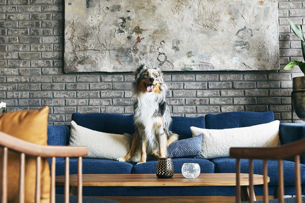 Dog sitting on a couch at the Kinley Hotel Chattanooga